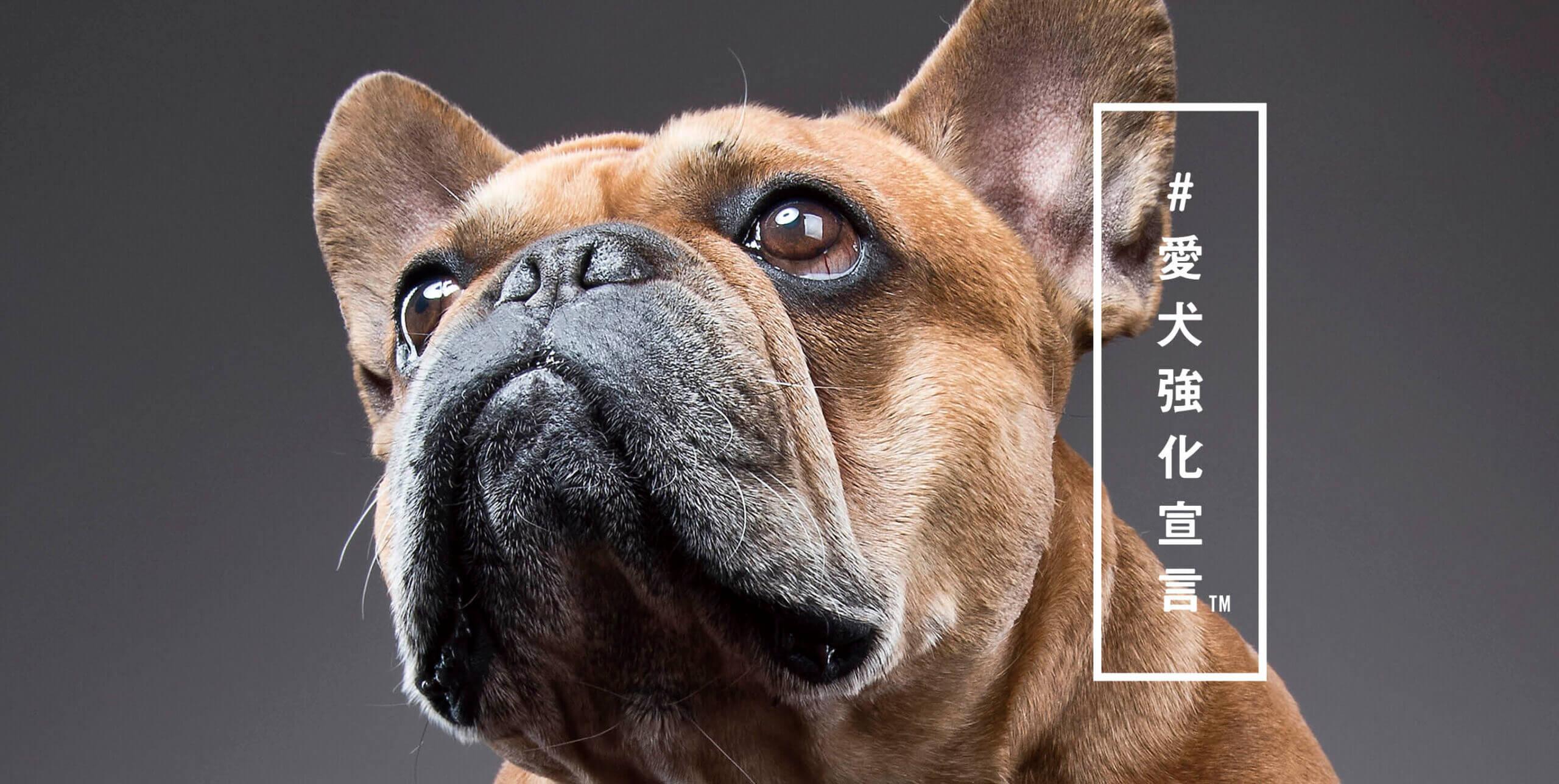#愛犬強化宣言™