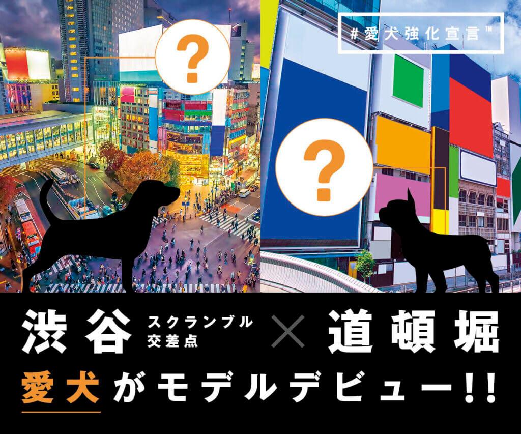 渋谷スクランブル交差点,道頓堀,愛犬強化宣言,届けよう,キャンペーン