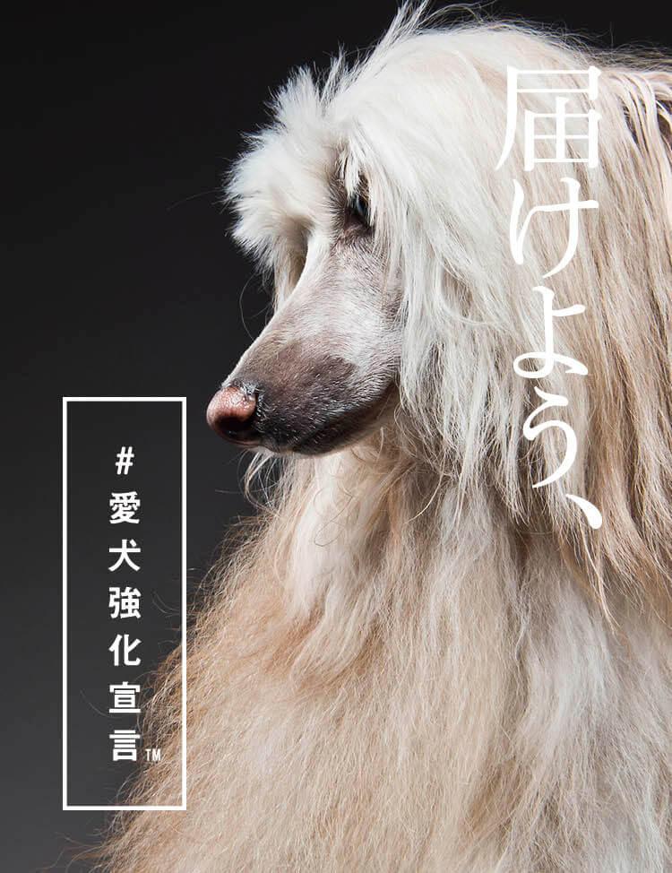 【愛犬がモデルデビュー】渋谷スクランブル交差点&道頓堀の大型ビジョンで、#愛犬強化宣言を届けよう