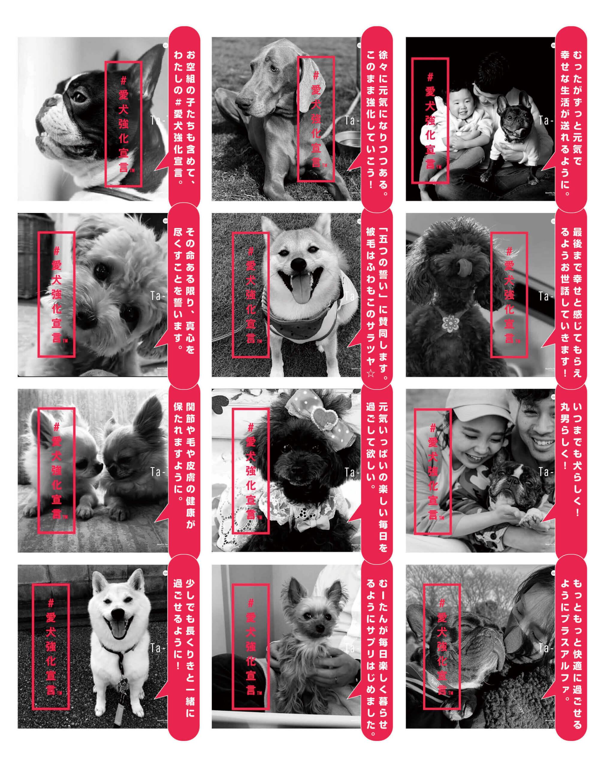 愛犬強化宣言